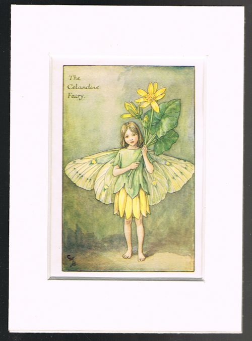 Image for The Celandine Fairy (Mounted Book Plate from 'Flower Fairies of the Spring')