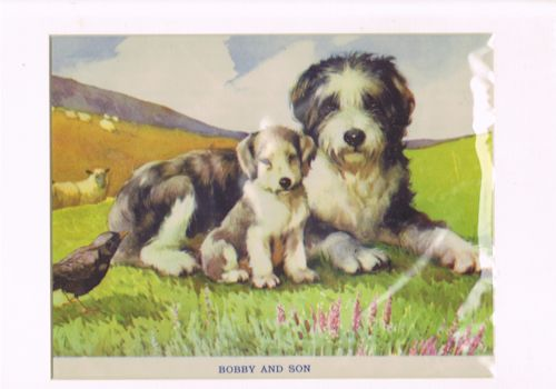 Image for Bobby and Son Sheepdogs (Mounted Illustration from 'Farm and Woodland Friends'