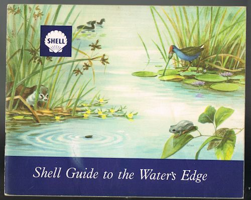 Image for Shell Guide to the Water's Edge