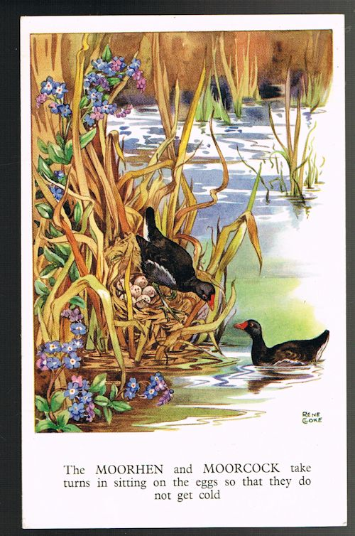 Image for The Moorhen and Moorcock Postcard