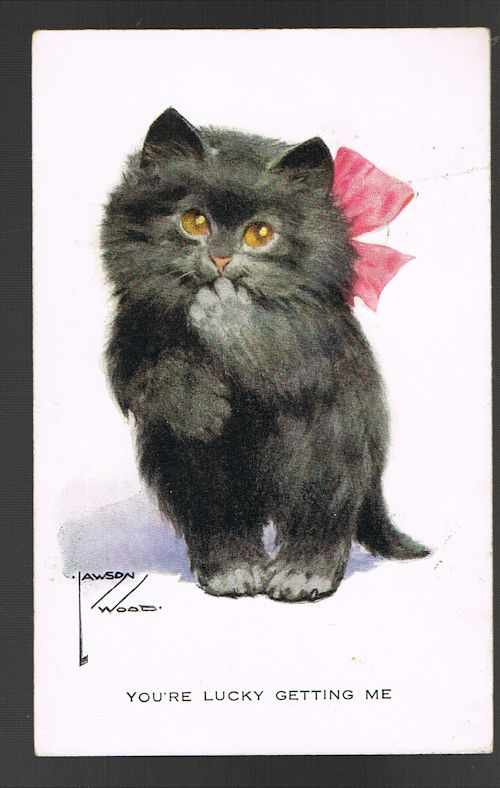 You're Lucky Getting Me Cat Postcard