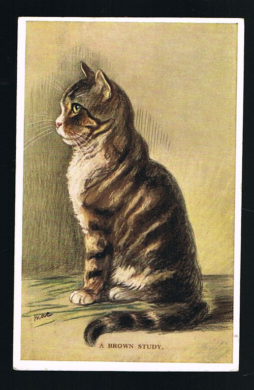 Image for A Brown Study Cat Postcard